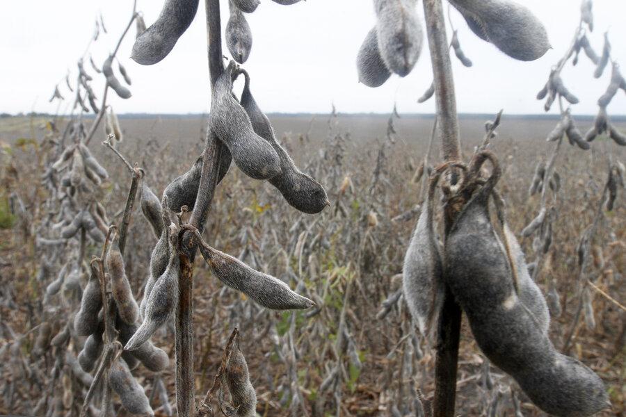 imagen de La ganadería, los granos y su combinación abarcaron 90% de los arrendamientos de tierras en el primer semestre del año