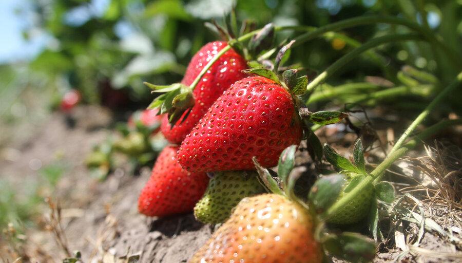 """imagen de La agroecología enfrenta varios """"cuellos de botella"""" para crecer, pero es """"factible"""" que en una década represente el 10% de la producción"""