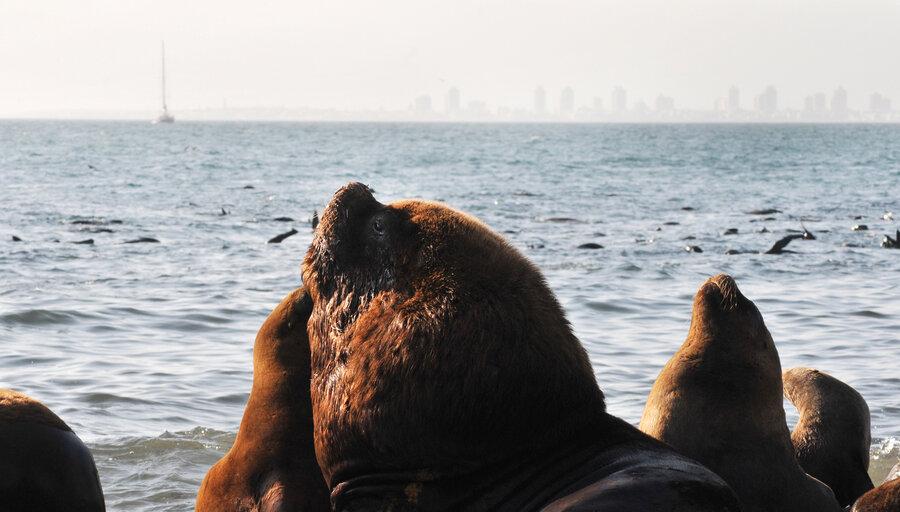imagen de National Geographic y Océanos Sanos preparan expedición inédita en aguas uruguayas para promover más áreas marinas protegidas