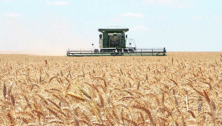 imagen de La cosecha de trigo tiende a un récord en kilos por hectárea y con precios al alza; estiman producción de 900.000 toneladas