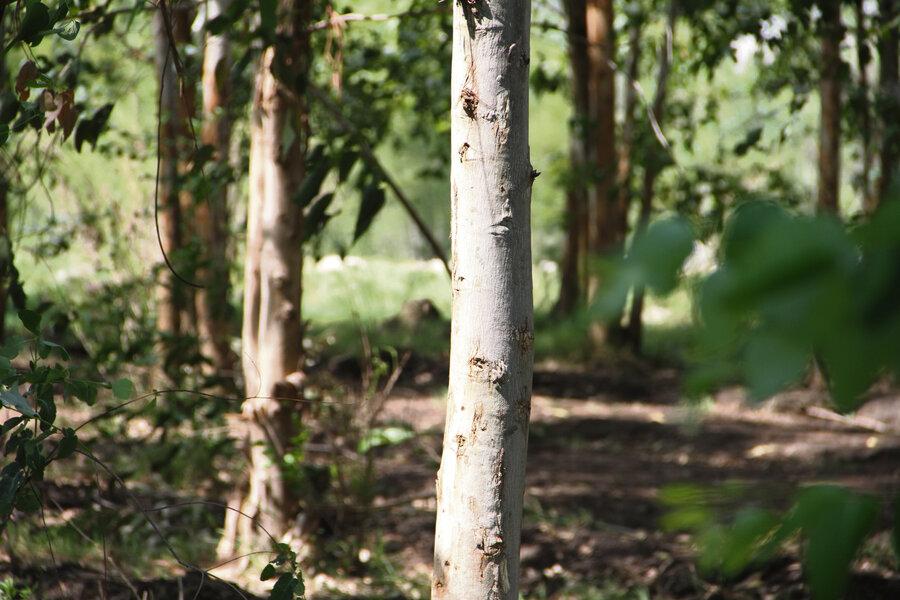 """imagen de Hay un """"stock disponible"""" de casi 400.000 hectáreas de prioridad forestal en zona de la nueva planta de celulosa, según el MGAP"""