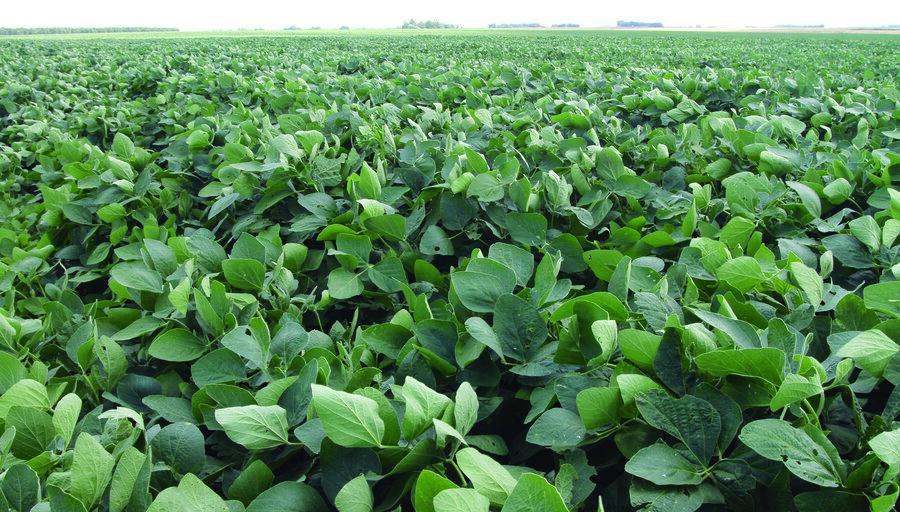 """El agua fue """"oro"""" para los cultivos de soja y avizoran un """"buen"""" año agrícola, atentos al cuidado sanitario en la cosecha"""