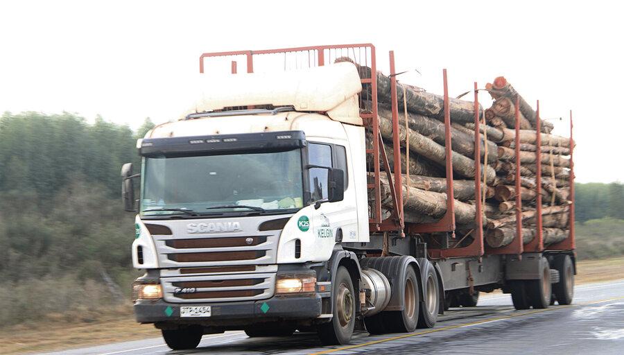 """imagen de MGAP prevé que forestación tendrá """"exigencia mayor"""", ya que autorización ambiental incluirá a predios a partir de 30 hectáreas"""